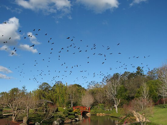 Bats flying over a wedding at the Japanese Gardens, Toowoomba, Qld. Australia by Marilyn Baldey