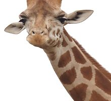 I'm Looking at You - Giraffe Print by JaceeDesigns
