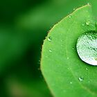 Raindrop by Steve Malcomson