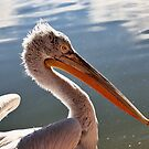 The Pelican Brief by Ann  Van Breemen