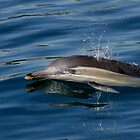Common Dolphin by Yanni