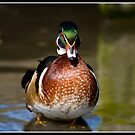 Wood duck at Martin mere by Shaun Whiteman
