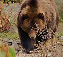 Grizzly by Meeli Sonn