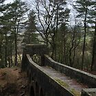 Treeline Bridge by Andrew Cryer