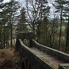 Treeline Bridge by Andrew Cryer