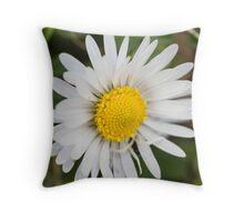 daisies in spring Throw Pillow