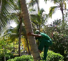 The coconut climbing business by Waleska Luker