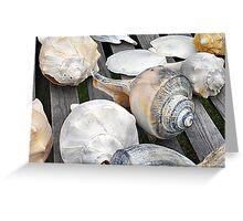 Chincoteague Shells Greeting Card