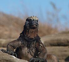 Marine Iguana at Galapagos Islands by Georgie Johnson