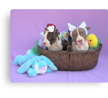 Easter Puppies Canvas Print