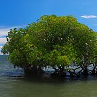 Coastal Mangroves by Steve Ungermann