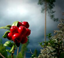 Berries by ilpo laurila