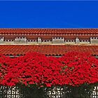 Tile Roof And Bougainvellea by Chet  King