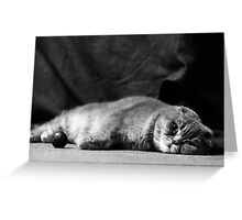 Chilling Looking Greeting Card