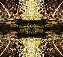 Natures Patterns 2 by justlinda