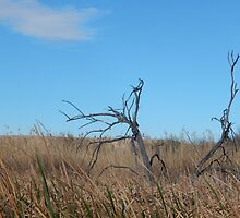 Dead Wood in the Weeds by HarmlessPet