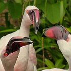 Three Beaks are Better than One. by Marilyn Grimble