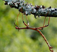 Don't disregard a Stick by Dennis Stewart
