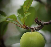 Single Apple by oozeart