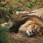 Lion by smallan