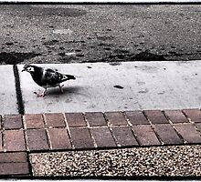 Funky Pigeon by Cyn Piromalli