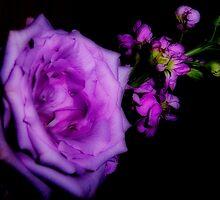 Softness in Purple by DottieDees