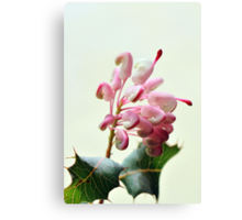 christmassy grevillea Canvas Print