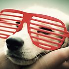 shutter dog by leeevi