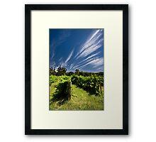 Feathertop Framed Print