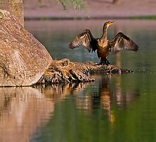 Double Crested Cormorant by Marvin Collins