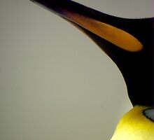 King Penguin Beak by Tamara  Kenneally