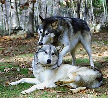 Brotherly Love by Asoka