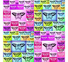 Butterfly Empire Photographic Print