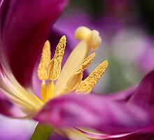 Purple panache by Jacky Parker