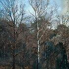 Tree by evaverhoeven