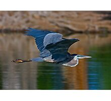 Great Blue Heron 11 Photographic Print