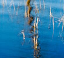 Reed Reflection by Nathan Lovas Photography