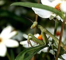 Lurking Amidst the Flowers by Dennis Stewart