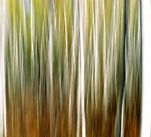 Birch Trees by Nathan Lovas Photography