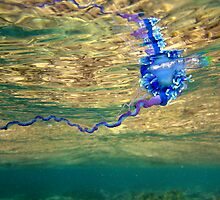 Portuguese Man O' War by jenitae