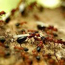 Exodus of the Carpenter Ants by Dennis Stewart