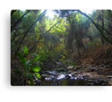 Enchanted Woods 2 Canvas Print