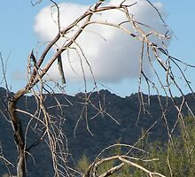 cloud and tree by Bonnie Pelton