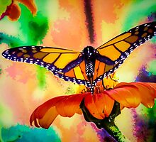 Monarch Butterfly & Mexican Sunflower by Joe Campbell