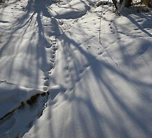 Snow Shadows by Adam Bykowski