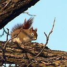 Squirrels 2011 by Jellybean720