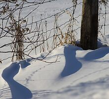 Winter Drifts  by Cathy  Beharriell