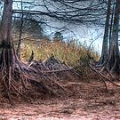 Syprus Trees III by wadesimages