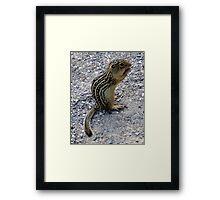 Chipmunk Framed Print