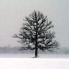 Blizzard Day by velveteagle